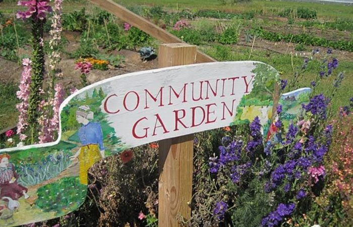 Help A Community Garden Rebuild: the African Alliance of Rhode Island